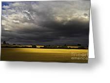 Rapefield Under Dark Sky Greeting Card