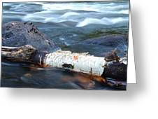 Rapids And Birch Greeting Card