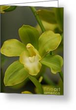 Rare Green Orchid Greeting Card