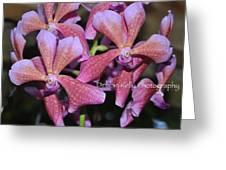 Rare Orchids Greeting Card