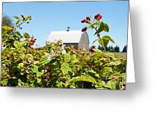 Raspberry Farm Greeting Card