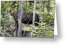 Raspberry Moose Greeting Card