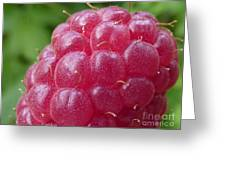 Raspberry Greeting Card