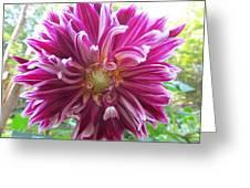 Raspberry Sundae Dahlia Greeting Card