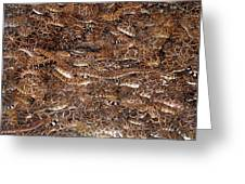 Rattle Snake Round-up Greeting Card