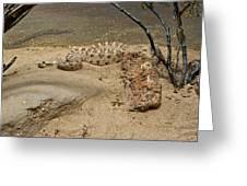 Rattlesnake Arizona Desert Greeting Card