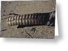 Rattlesnake Rattle Greeting Card