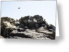 Raven Flying Over Tafoni Greeting Card