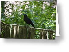 Raven In The Wild Greeting Card