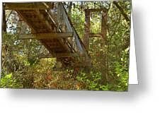 Ravine State Gardens Palatka Florida Greeting Card