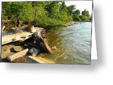 Raw Lake Erie Shore Greeting Card