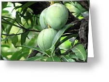 Raw Mangoes Greeting Card
