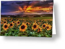 Rays Of Sunflowers Greeting Card