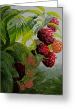 Razzleberries Greeting Card