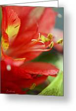 Reach Abstraction Limited Edition Bodecoarts Greeting Card