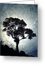 Reach For The Sky .. Greeting Card