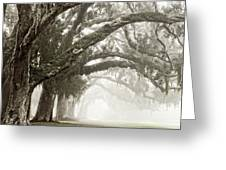 Reaching Branches Greeting Card