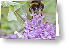 Reaching For Nectar Greeting Card