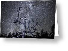 Reaching For The Stars Greeting Card by Nancy Strahinic