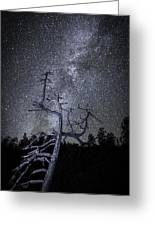Reaching For The Stars Greeting Card