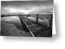 Reaching Into Sunset In Black And White Greeting Card