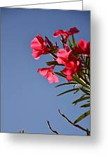 Reaching Out 30016 Greeting Card