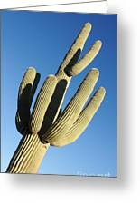 Reaching Skyward Greeting Card