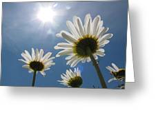 Reaching Up To Sol Greeting Card