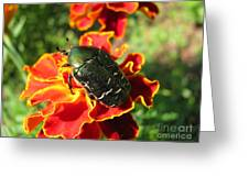 Ready For A Flight_1 Greeting Card