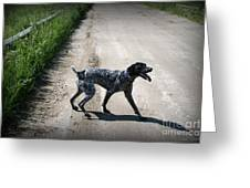Ready For A Walk Greeting Card