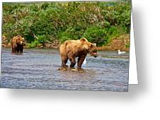Ready To Pounce On A Salmon  In The Moraine River In Katmai National Preserve-ak Greeting Card