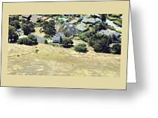 Real Tortoise Estate Greeting Card