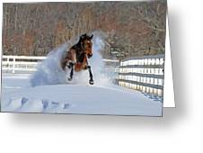 Real Horse Power Greeting Card