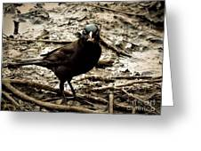 Really It Is Mine- Says The Grackle Bird Greeting Card