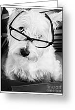 Really Portait Of A Westie Wearing Glasses Greeting Card