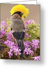 Rear View Of Female Bullfinch Standing Greeting Card