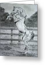 Rearing Horse Greeting Card