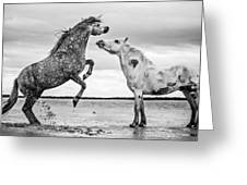 Rearing Stallion I Greeting Card by Tim Booth