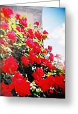 Recesky - Bright Roses Greeting Card
