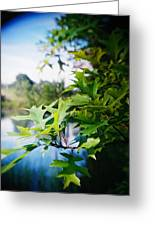Recesky - Summer Oak Leaves Greeting Card