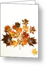 Reconstructed Full Moon Maple Greeting Card
