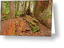 Recycling In The Cheakamus Rainforest Greeting Card