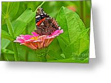 Red Admiral Butterfly And Zinnia Flower Greeting Card