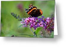 Red Admiral Butterfly On Butterfly Bush Greeting Card