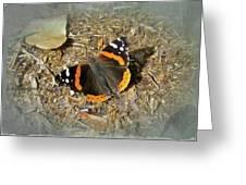 Red Admiral Butterfly - Vanessa Atalanta Greeting Card