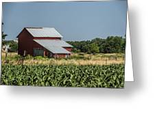 Red Amish Barn And Corn Fields Greeting Card