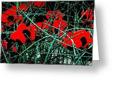Red An Black Poppies 1 Greeting Card