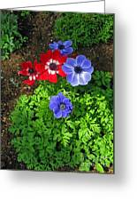 Red And Blue Anemones Greeting Card