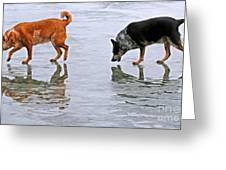 Red And Blue Heelers Greeting Card