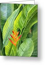 Red And Gold Heliconia Greeting Card